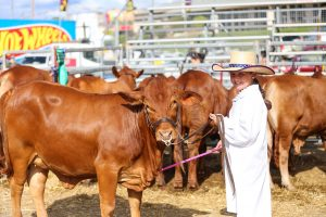 Cattle Young Judges